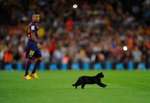 """カンプ・ノウに""""珍客""""…不吉の象徴、黒猫もバルセロナには幸運の証?"""