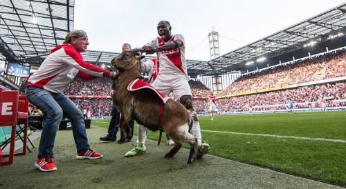 ゴールを喜びヤギの角を引っ張ったケルンFW、動物愛護団体から訴えられていた