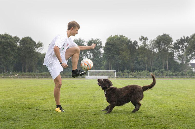 犬 サッカー